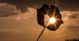 Sonne scheint durch Herzförmiges Blattloch